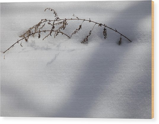 Shadow On Snow 2 Wood Print