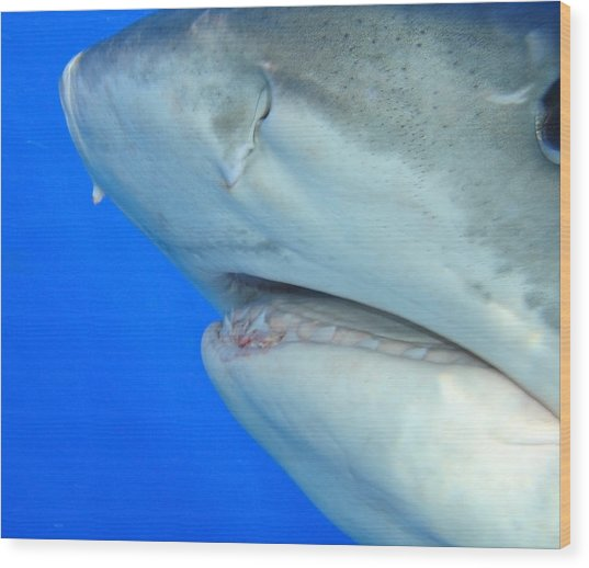 Shark Up Close And Personal Wood Print
