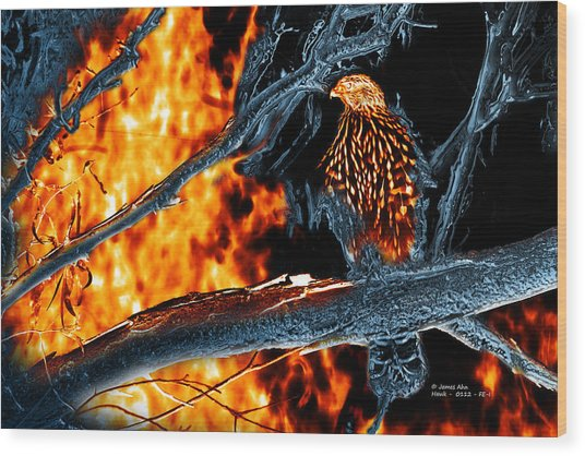 Sharp Shinned Hawk 0112 Fire And Ice Art Wood Print