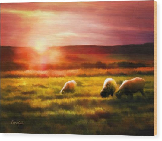 Sheep In Sunset Wood Print