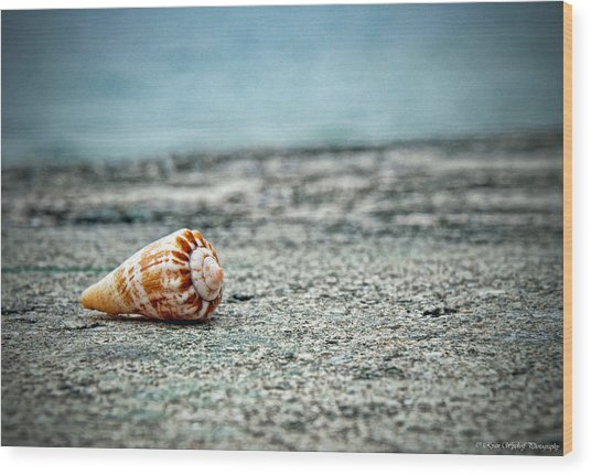 Wood Print featuring the photograph Shell by Ryan Wyckoff