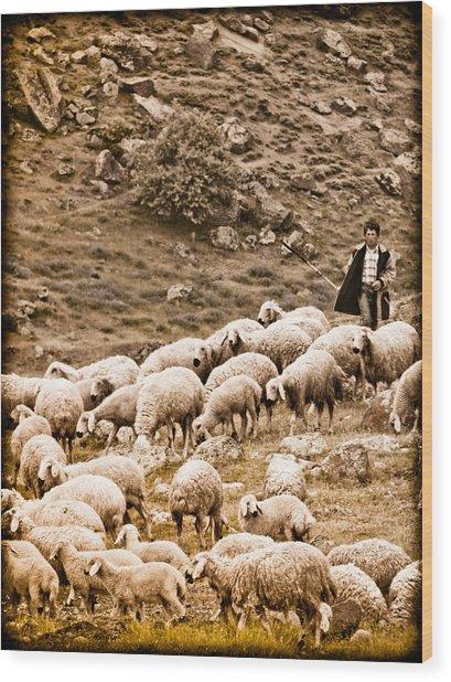 Guzelyurt, Turkey - Shepherd Wood Print