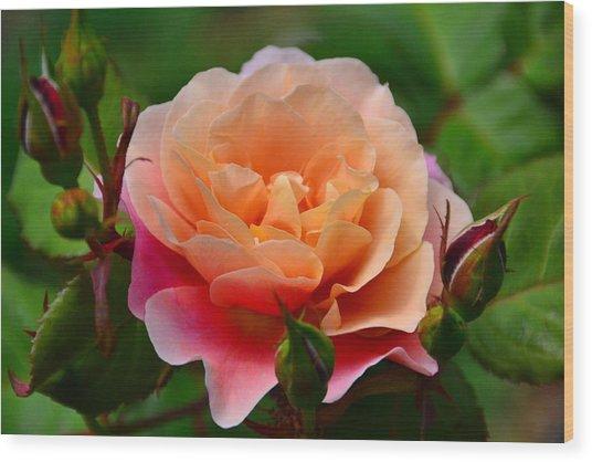 Sherbet Rose Wood Print