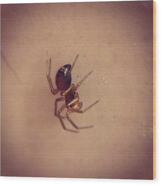 #shiny #golden #tiny #spider #macro Wood Print