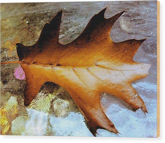 Shiny Oak Wood Print by Beth Akerman