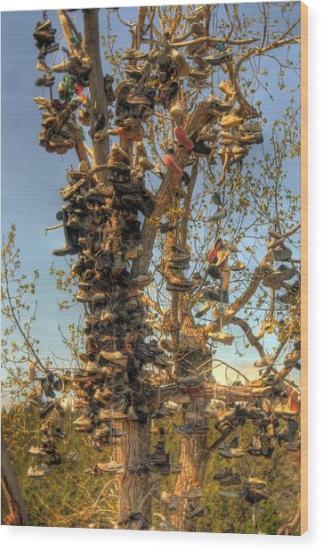 Shoe Tree Wood Print by Lori Kimbel