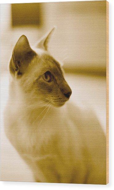 Siamese Feline Wood Print