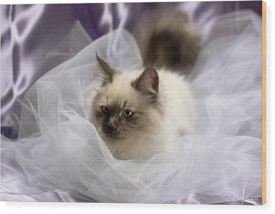 Siberian Kitty On Lilac Wood Print