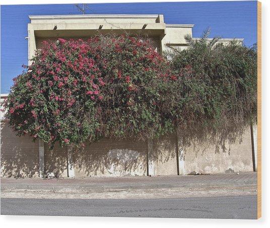 Sidewalk Florae In Doha Wood Print by David Ritsema