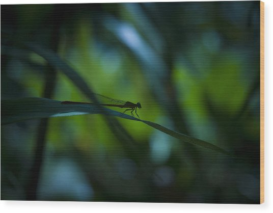 Silhouette Of A Damselfly Wood Print