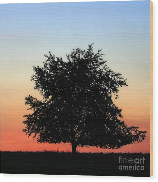 Make People Happy  Square Photograph Of Tree Silhouette Against A Colorful Summer Sky Wood Print