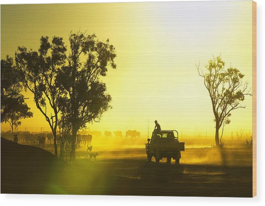 Silhouetted Cattle Muster At Sunset, Armraynald Station Wood Print by Johnny Haglund