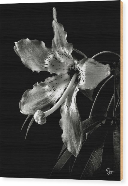 Silk Flower In Black And White Wood Print