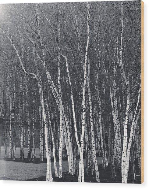 Silver Trees Wood Print