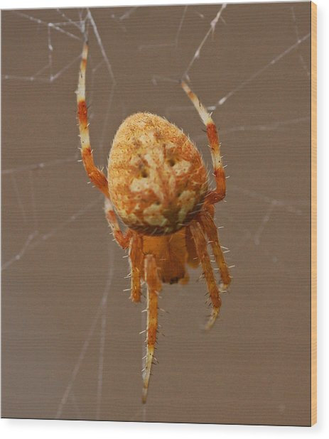 Simba The Spider Wood Print by Chet King