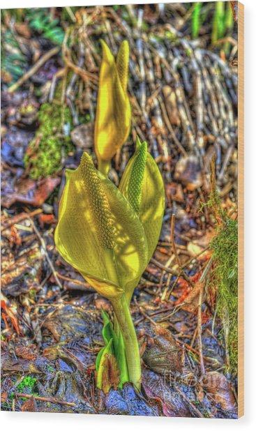 Skunk Cabbage - 2 Wood Print