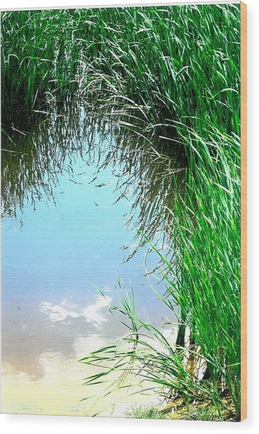 Sky Reflected Wood Print by Suzanne Fenster