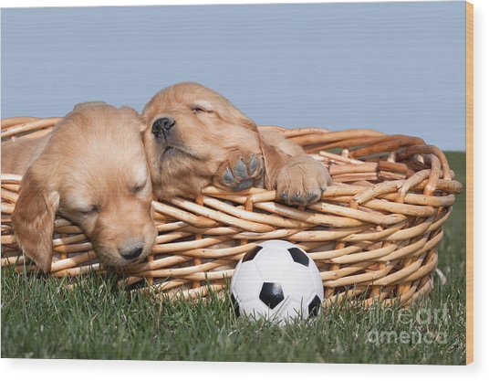Sleeping Puppies In Basket And Toy Ball Wood Print
