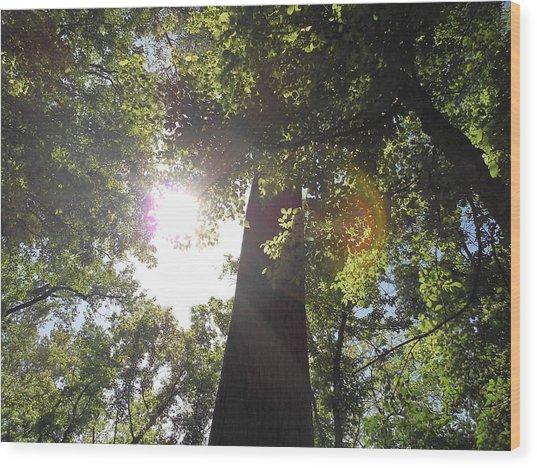 Sleeping Under The Trees Wood Print by Craig Keller