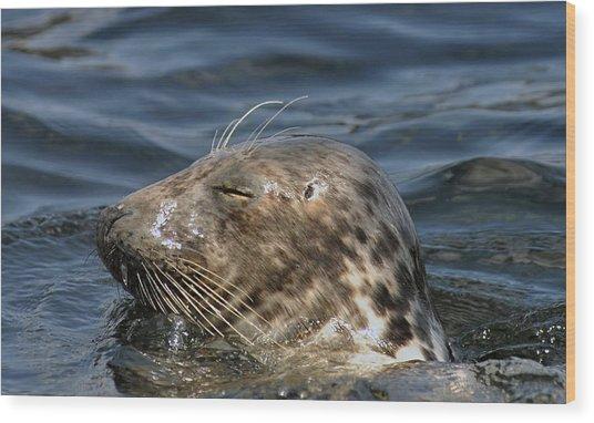 Sleepy Seal Wood Print