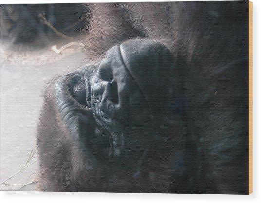 Sleepy Time Wood Print by Al Cash