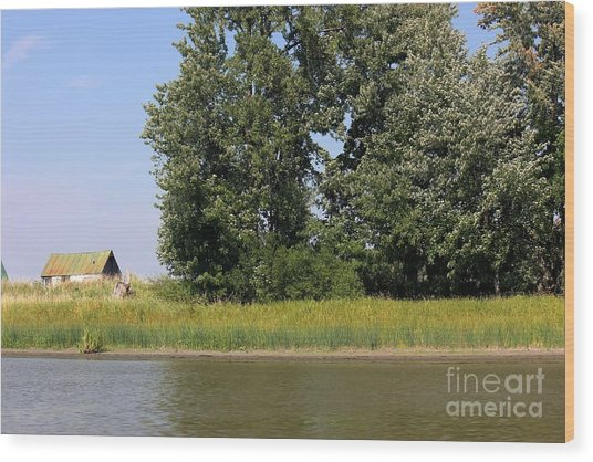 Small Barn Big Trees Wood Print by Sophie Vigneault