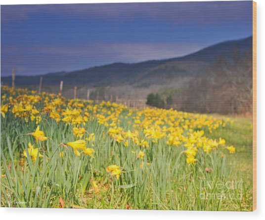 Smoky Mountain National Park Daffodil Spring Wood Print