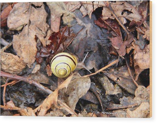 Snail In The Leaves Wood Print by Carolyn Postelwait