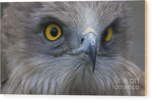 Snake Eagle 2 Wood Print