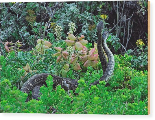 Snakes In The Grass Wood Print by Richard Leon