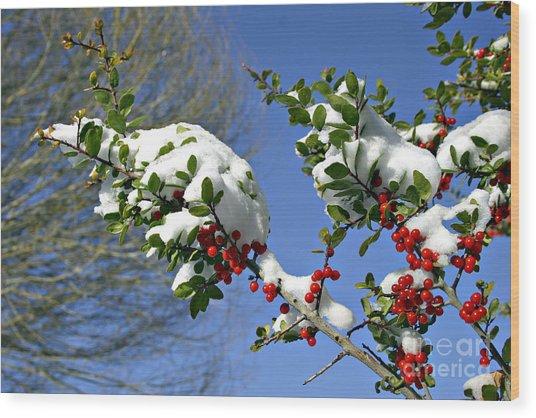 Snow Berrys Wood Print