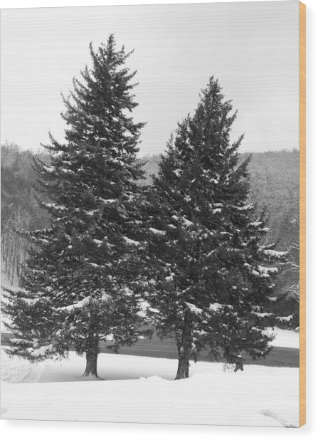 Snow Covered Trees Wood Print by Carrie Munoz