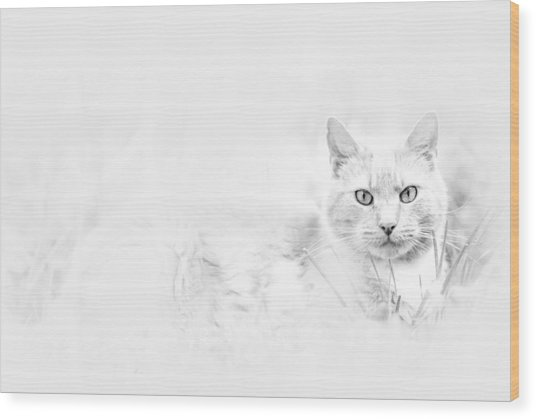 Snow Eyes Wood Print