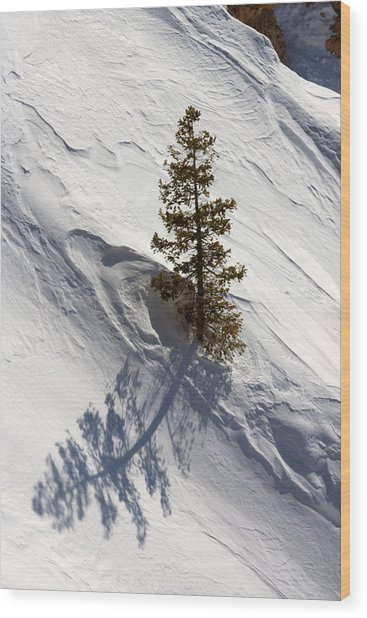 Snow Shadow Wood Print