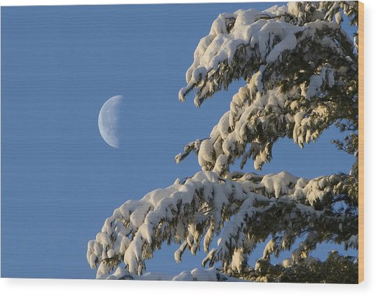 Snowy Moon Wood Print