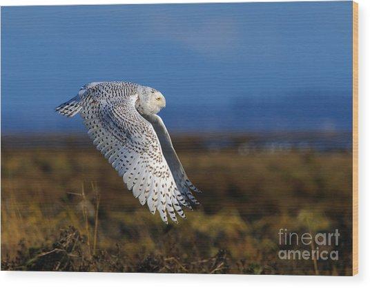 Snowy Owl 1b Wood Print