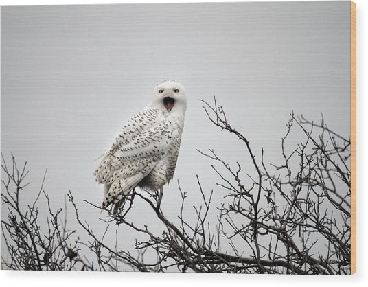 Snowy Owl In A Tree Wood Print by Pierre Leclerc Photography