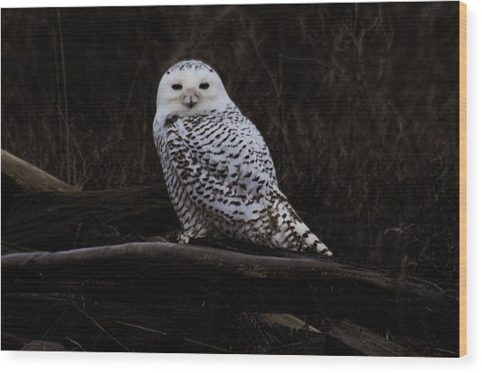 Snowy Owl Two Wood Print