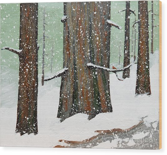 Snowy Redwood Wood Print