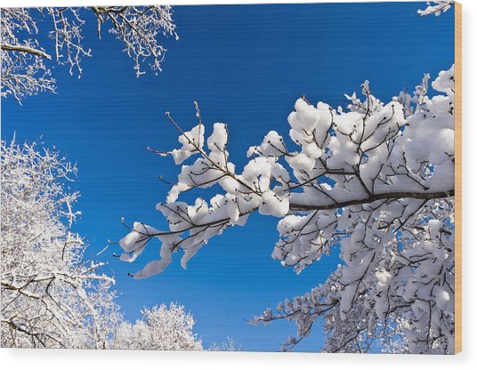 Snowy Trees And Blue Sky Wood Print