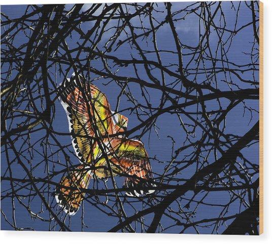 Soar  Wood Print by Andrew Kubica