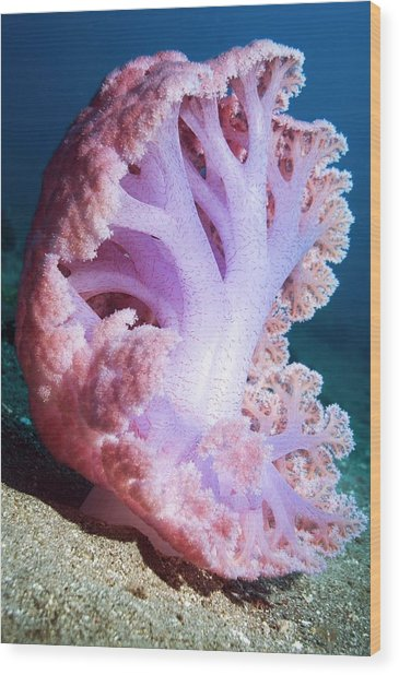 Soft Coral On The Seabed Wood Print by Georgette Douwma