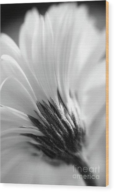 Soft Gerbera Wood Print