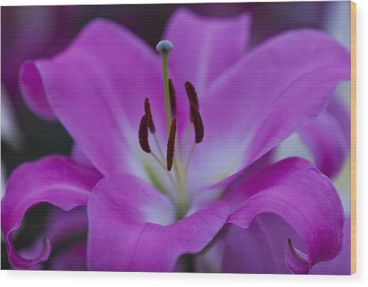 Soft Purple Wood Print