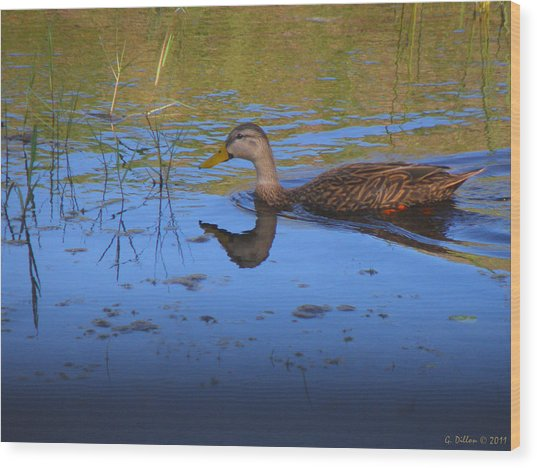 Solitary Duck In Autumn Wood Print