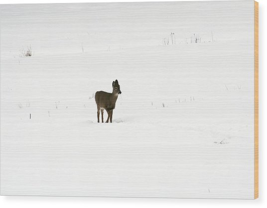 Solitude Wood Print by Shirley Mailloux