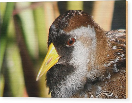 Sora Head Shot Wood Print