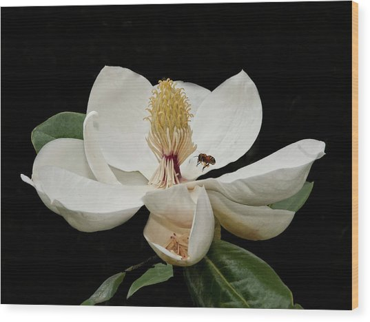 Southern Magnolia With Bee Wood Print