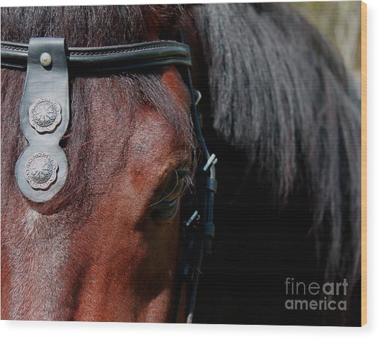 Spanish Horse Wood Print by Christean Ramage