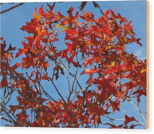 Spanish Oak Tree In Texas Wood Print by Rebecca Cearley